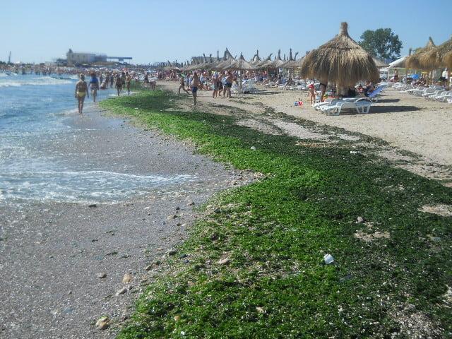 Alge lasate pe plaja