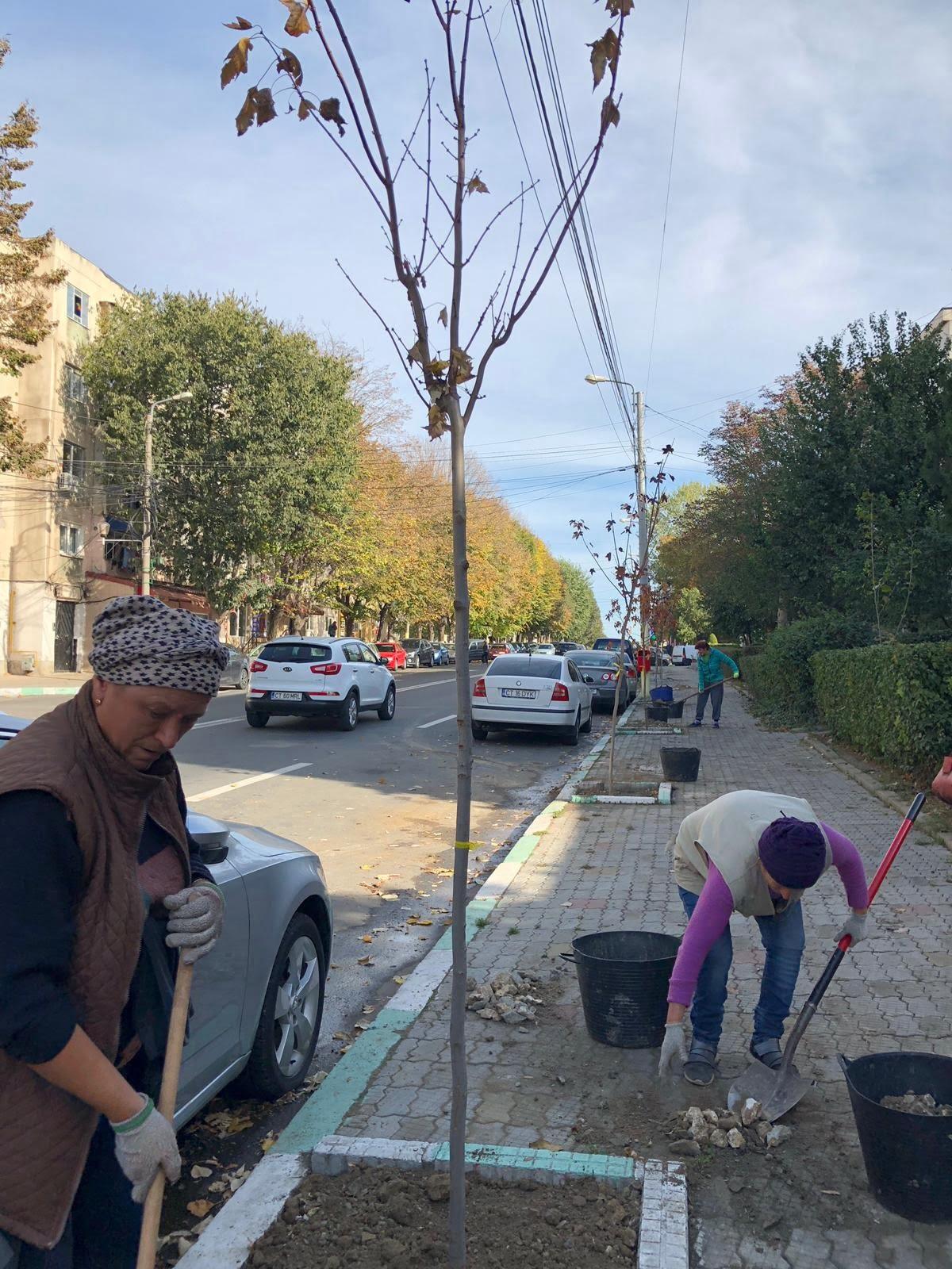 plantare pomi Navodari