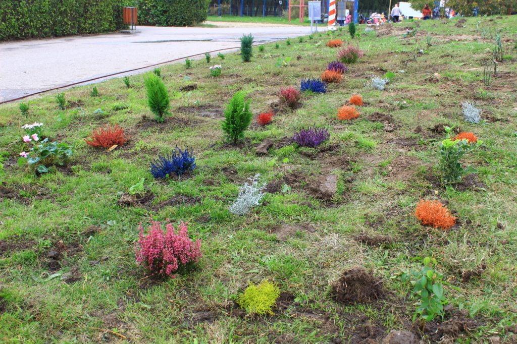 plantare flori 3