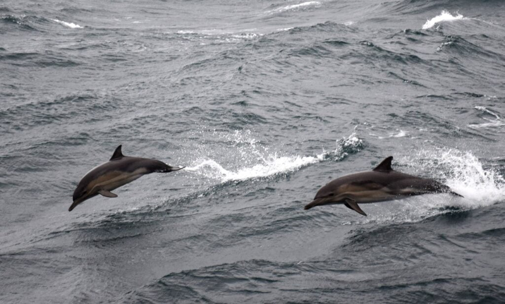 naval5 delfini