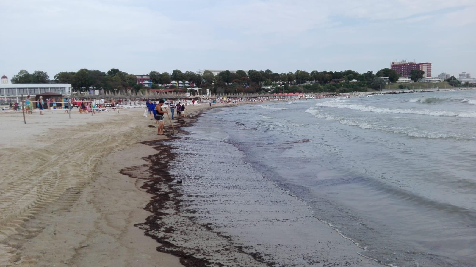 poluare marea neagra