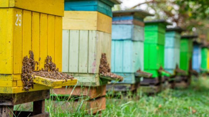apia apicultura