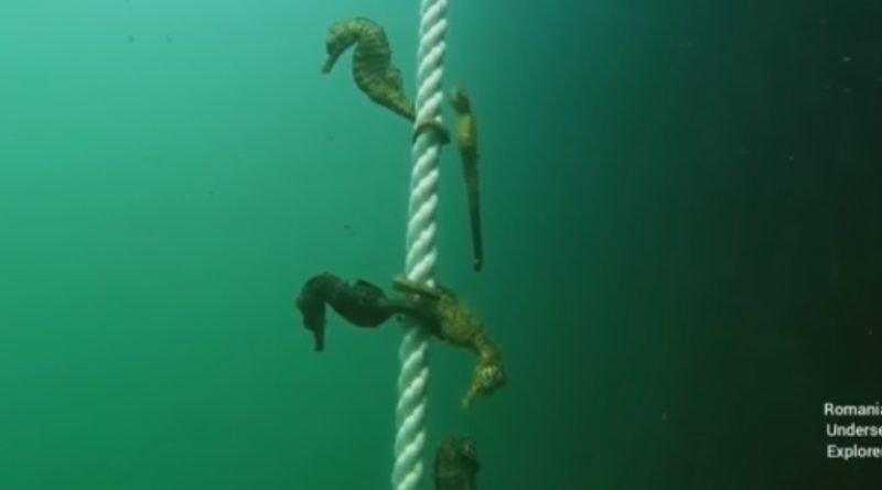 caluti de mare