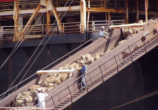 transport maritim animale
