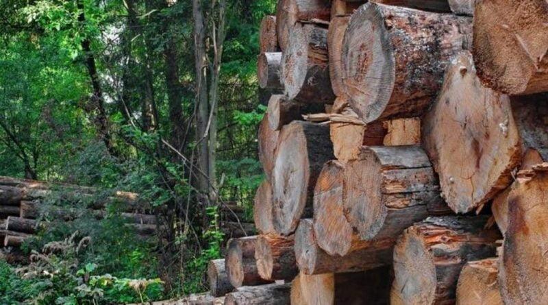 romsilva lemn